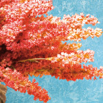 pittura decorativa oikos granada l'arte del decoro san filippo del mela messina sicilia decorazioni interni esterni ristrutturazioni